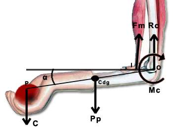 Esquema biomecánico de momentos y cargas en el codo