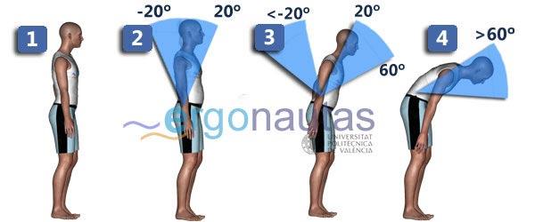 ergonautas- REBA - Puntuación del tronco